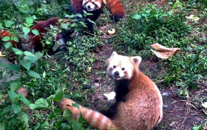 Nanjing Hongshan Forest Zoo